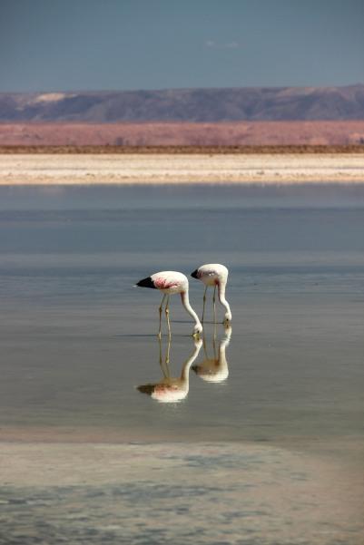 Atacama-12